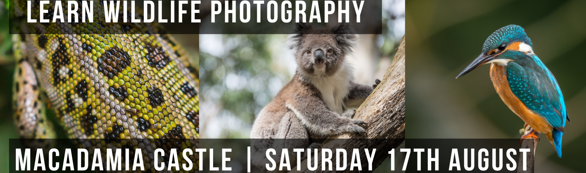Wildlife_photography_banner